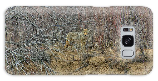 Coyote In The Brush Galaxy Case