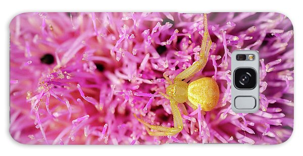 Crab Spider Galaxy Case