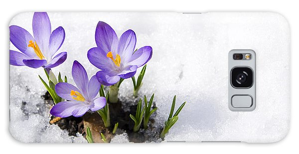 Horizontal Galaxy Case - Crocuses In Snow by Volkova Irina