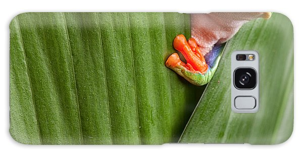 Hiding Galaxy Case - Curious Red Eyed Tree Frog Hiding In by Dirk Ercken