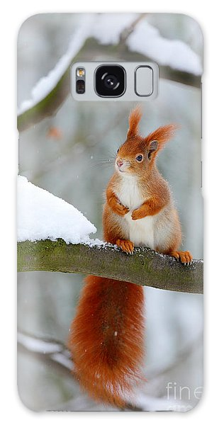 Furry Galaxy Case - Cute Red Squirrel In Winter Scene With by Ondrej Prosicky