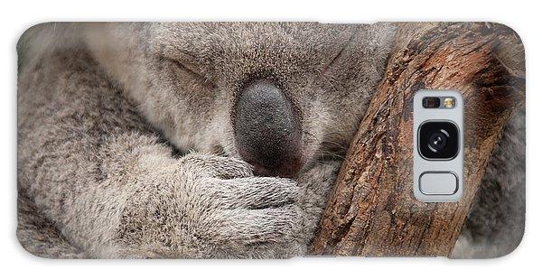 Claws Galaxy Case - Cute Sleeping Wild  Koala Closeup by Papuchalka - Kaelaimages
