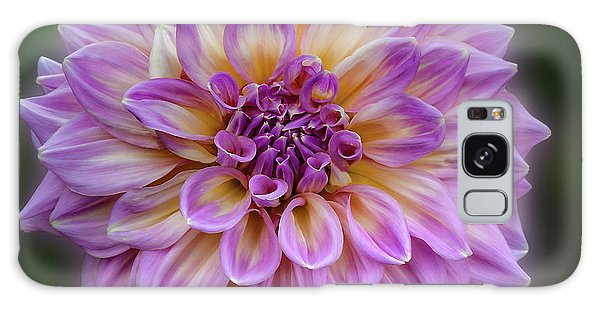 Galaxy Case featuring the photograph Dahlia 'kidd's Climax' by Ann Jacobson