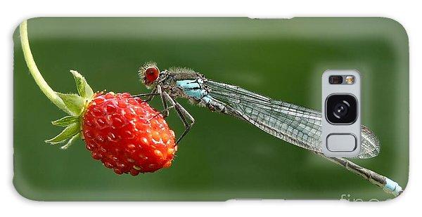 Natural Galaxy Case - Damselfly On Strawberry by Miroslav Hlavko