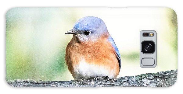 Eastern Bluebird Galaxy Case - Darling Eastern Bluebird by Mary Ann Artz