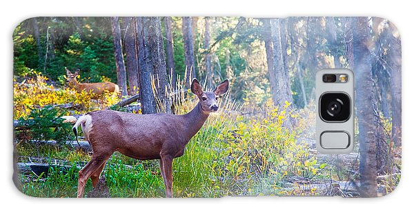 White-tailed Deer Galaxy Case - Deer Standing In Sunshine In Forest by Lynn Yeh