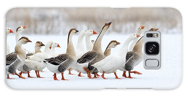 Goose Galaxy Case - Domestic Geese Outdoor In Winter by Aabeele