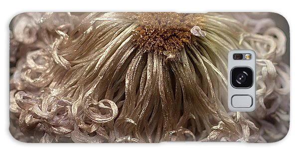 Galaxy Case featuring the photograph Dried Chrysanthemum 'satin Ribbon' by Ann Jacobson