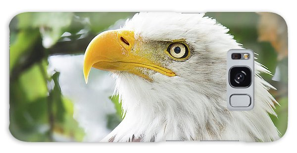 Bald Eagle Perched In A Tree Galaxy Case