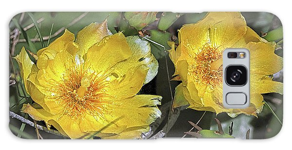 Galaxy Case featuring the photograph Eastern Prickley Pear Cactus Flower On Assateague Island by Bill Swartwout Fine Art Photography