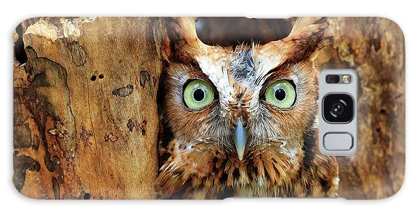 Eastern Screech Owl Perched In A Hole In A Tree Galaxy Case