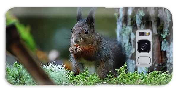 Eating Squirrel Galaxy Case