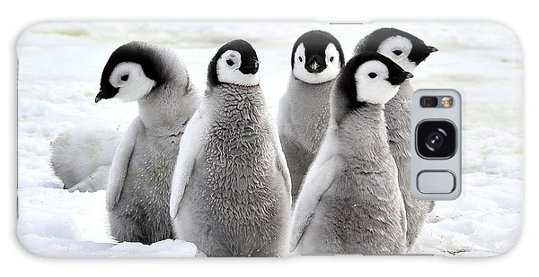 Young Galaxy Case - Emperor Penguin Chicks On The Snow In by Vladsilver