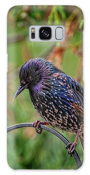 Galaxy Case - European Starling by Adrian Evans