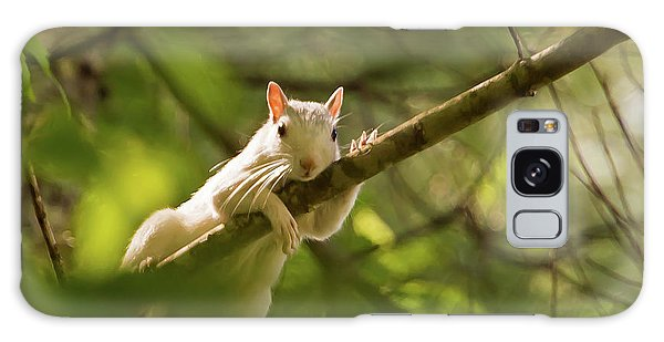 Famous Brevard White Squirrel Galaxy Case