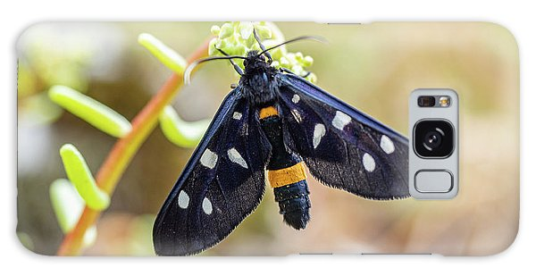 Fegea - Amata Phegea -black Insect With White Spots And Yellow Details Galaxy Case