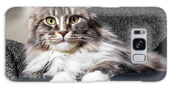 Feline Beauty Galaxy Case