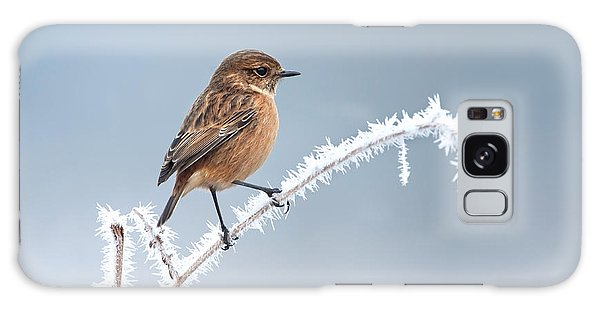 Perches Galaxy Case - Female European Stonechat On A Frosted by Giedriius