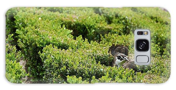 Female Peafowl Among The Bushes In Retiro Park, Madrid, Spain Galaxy Case