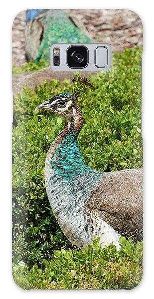 Female Peafowl At The Gardens Of Cecilio Rodriguez In Madrid, Spain Galaxy Case