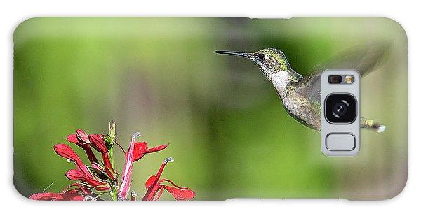 Female Ruby-throated Hummingbird Dsb0320 Galaxy Case