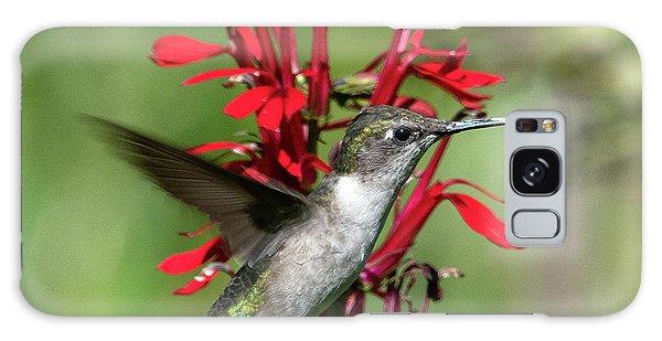 Female Ruby-throated Hummingbird Dsb0325 Galaxy Case
