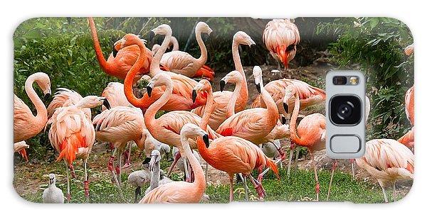 Flamingos Outdoors Galaxy Case