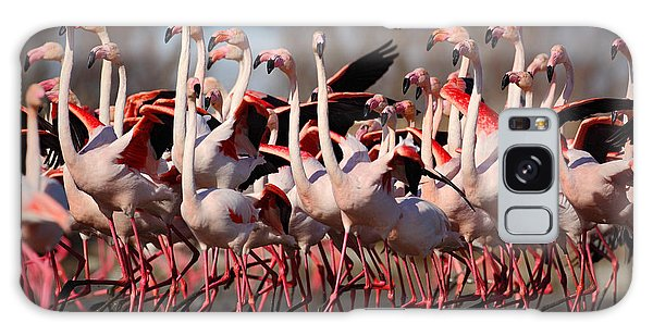 Great Lakes Galaxy Case - Flock Of  Greater Flamingos by Ondrej Prosicky