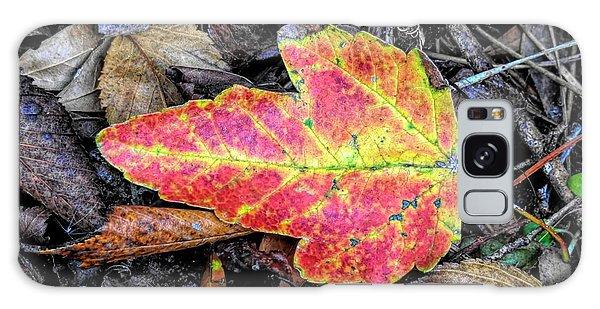 Florida Foliage Galaxy Case