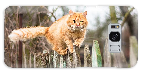Furry Galaxy Case - Fluffy Ginger Tabby Cat Walking On Old by Lkoimages