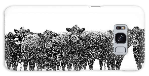 Frosty Faces Black Angus Cows Montana Galaxy Case