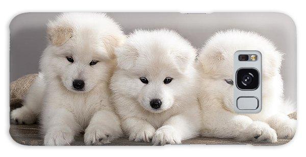 Active Galaxy Case - Funny Puppies Of Samoyed Dog Or Bjelkier by Liliya Kulianionak