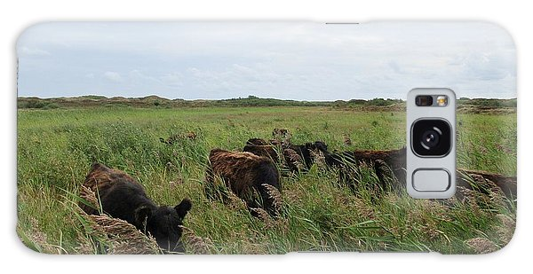 Galloway Cows On Texel North Holland Galaxy Case