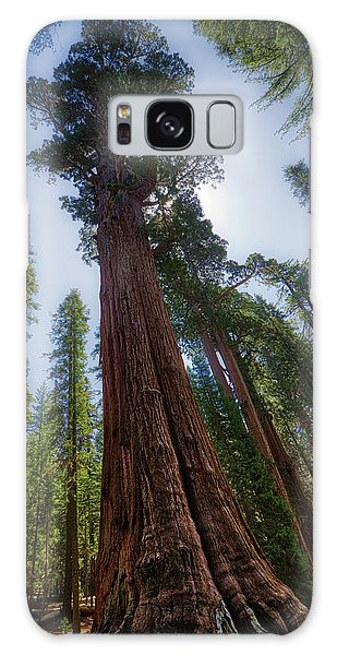 Giant Sequoia Tree Galaxy Case
