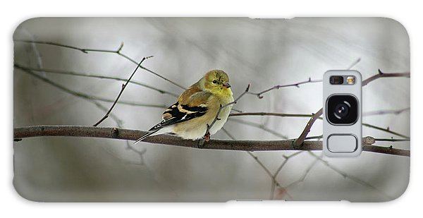 Goldfinch In Winter Looking At You Galaxy Case