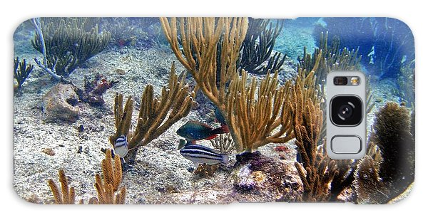 Gorgonian Parrotfish Galaxy Case