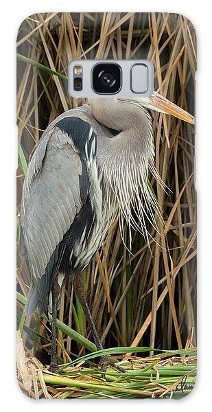 Great Blue Heron On Padre Island Galaxy Case