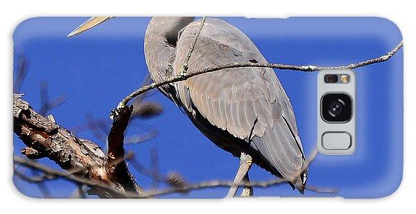 Great Blue Heron Strikes A Pose Galaxy Case