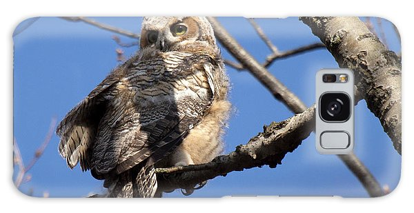 Great Horned Owlet 42915 Galaxy Case
