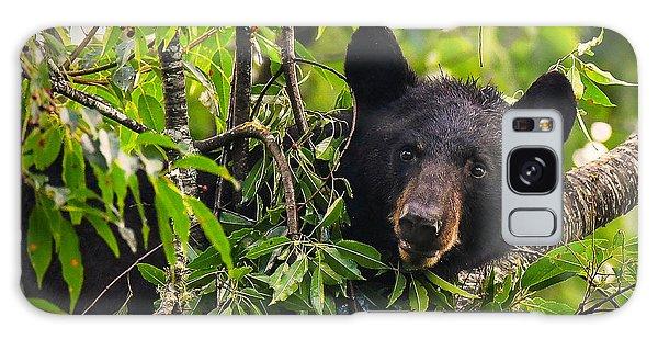 Great Smoky Mountains Bear - Black Bear Galaxy Case