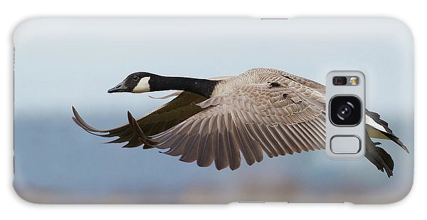 Canada Goose Galaxy Case - Greater Canada Goose Alighting by Ken Archer