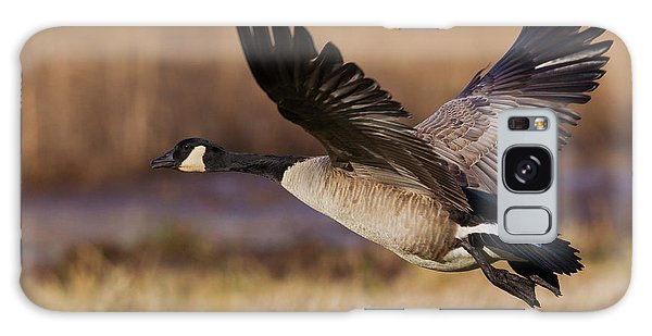 Canada Goose Galaxy Case - Greater Canada Goose Taking by Ken Archer