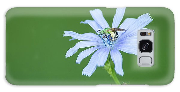 Green Metallic Bee On Blue Chicory Flower Galaxy Case