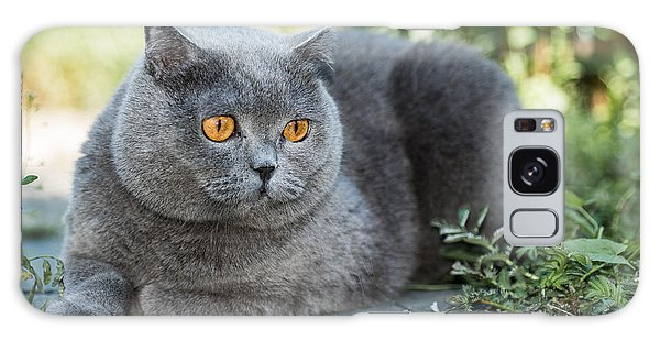 Scottish Galaxy Case - Grey British Cat Lying In The Green by Anton Papulov