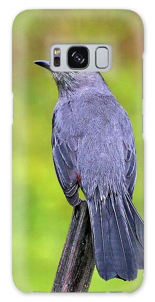 Grey Catbird Galaxy Case