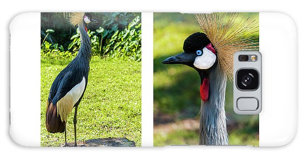 Grey Crowned Crane Gulf Shores Al Collage 10 Diptych Galaxy Case