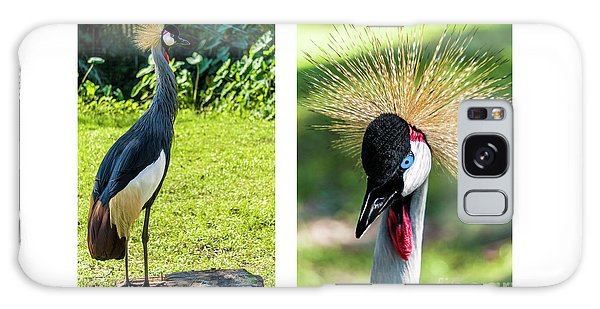 Grey Crowned Crane Gulf Shores Al Collage 8 Diptych Galaxy Case