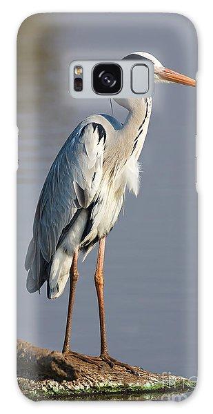 Perches Galaxy Case - Grey Heron  Ardea Cinerea  South Africa by Johan Swanepoel