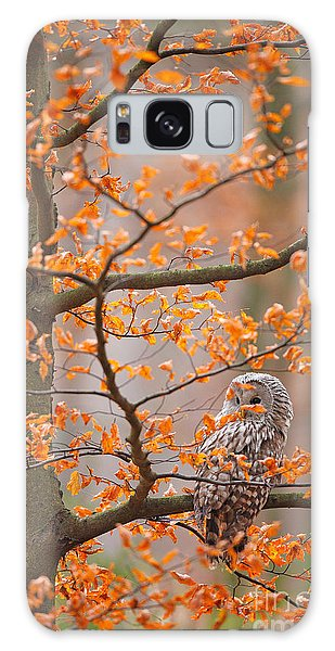 Perches Galaxy Case - Grey Ural Owl, Strix Uralensis, Sitting by Ondrej Prosicky