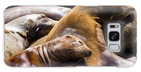 Travel Destinations Galaxy Case - Group Of California Sea Lions Sun by Wollertz